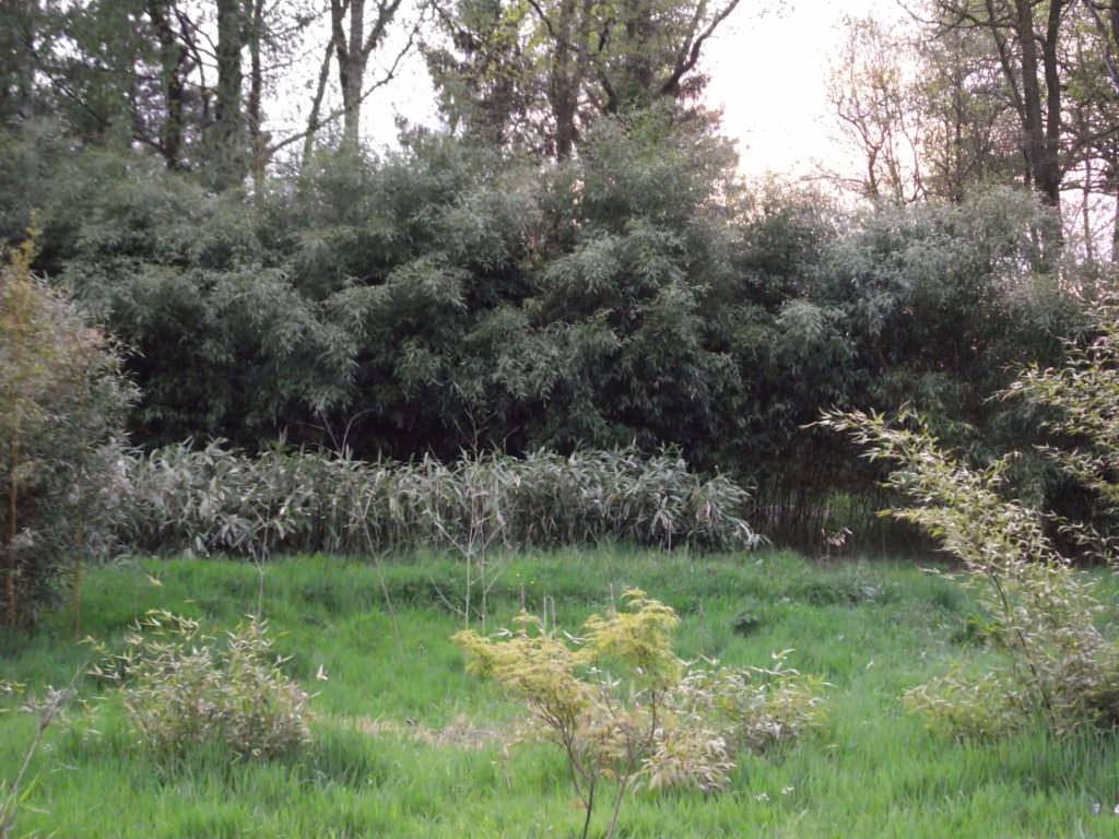 2014_1217Bambusplantage-20140009