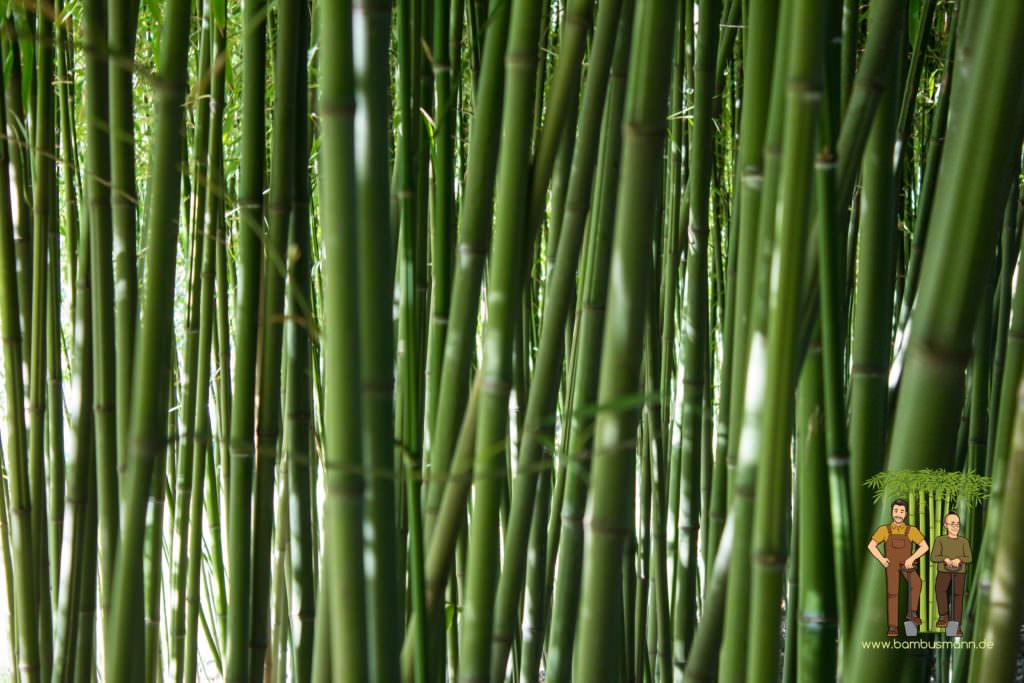bamboo-background-01