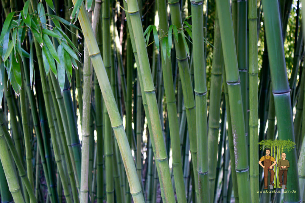 bamboo-background-02