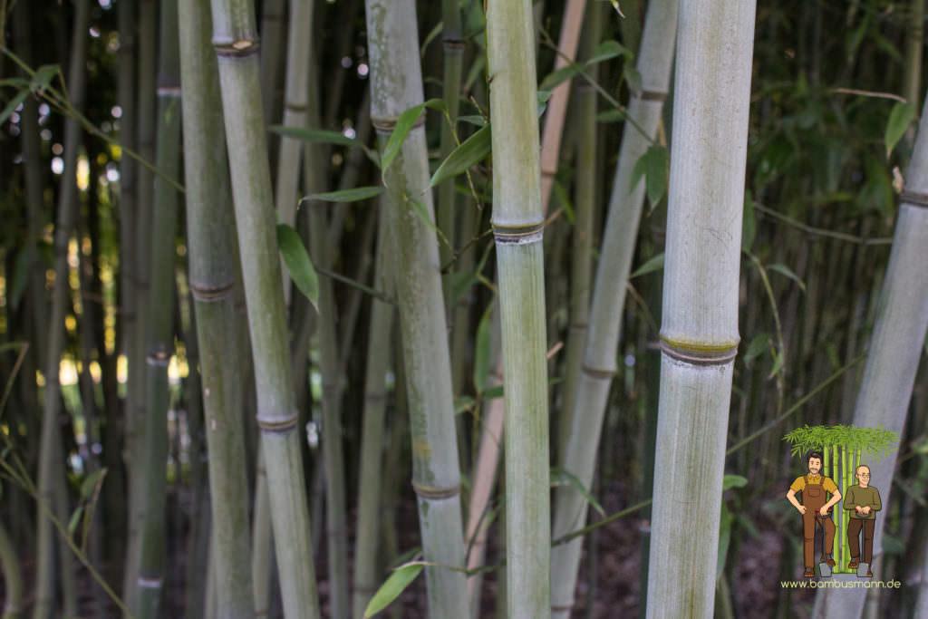 bamboo-background-03