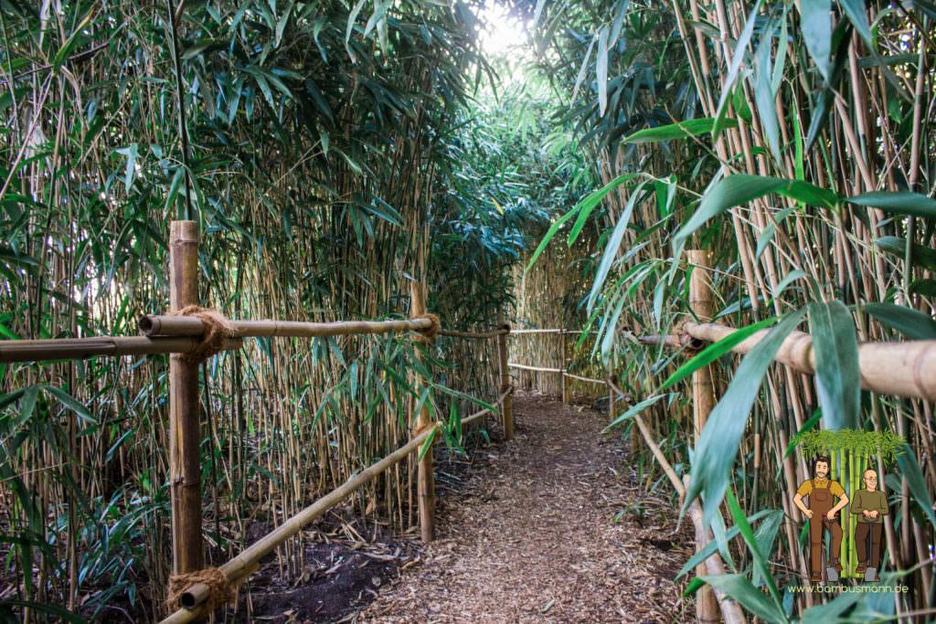 bamboo-background-04
