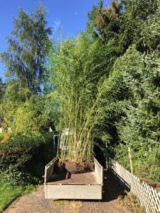 bambus-lieferung