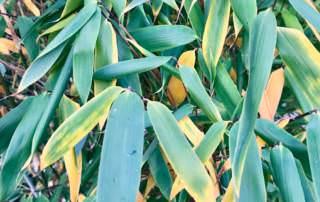 Gelbe Blätter im Herbst