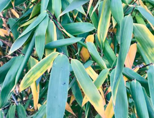 Keine Panik, gelbe Blätter im Herbst0 (0)