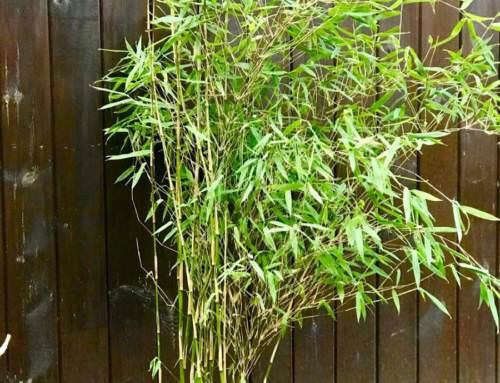 Jiuzhaigou 4 Jade Bambus 35 Euro