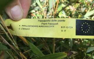 Pflanzenpass Beispiel