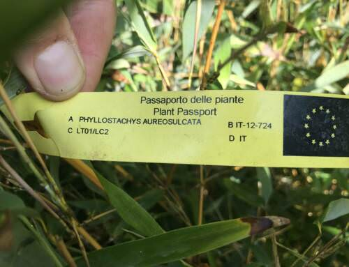 Was ist ein Pflanzenpass?0 (0)